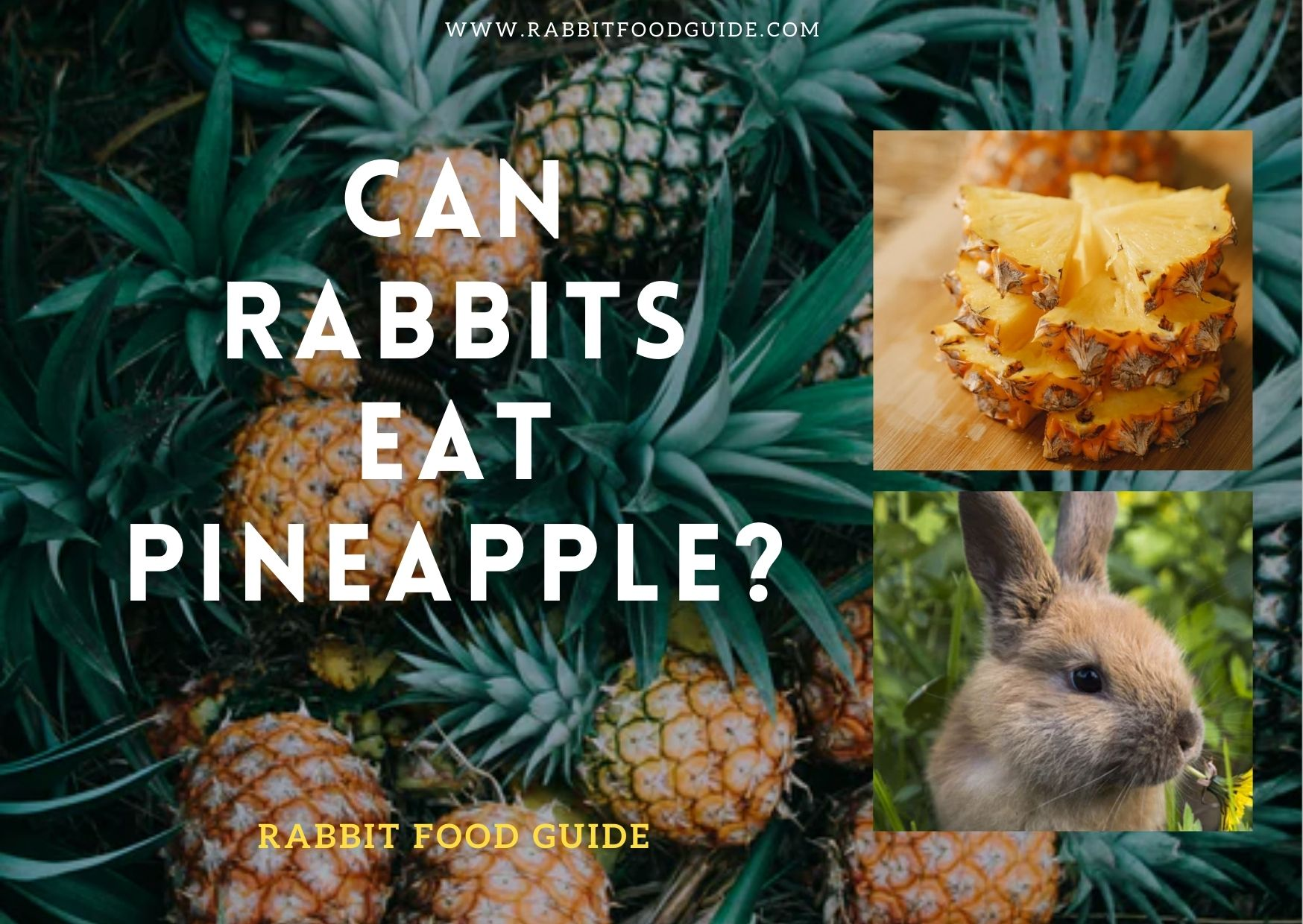 Can Rabbits Eat Pineapple Benefits, Issues & Extra Preparation Guide