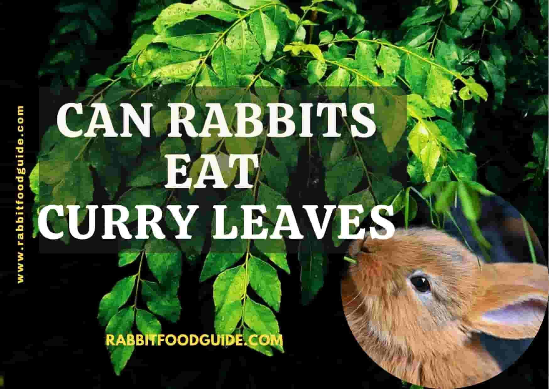 can rabbits eat curry leaves