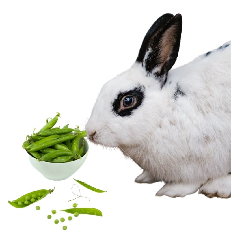 can bunnies have green beans?